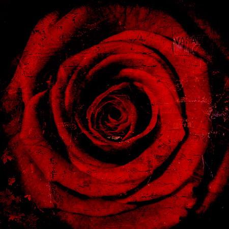 rose-by-heikki-luoto.jpg